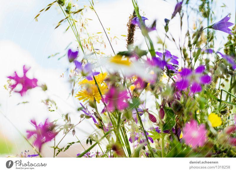 Sommererinnerung Pflanze Blume Blatt Blüte Gras hell Duft
