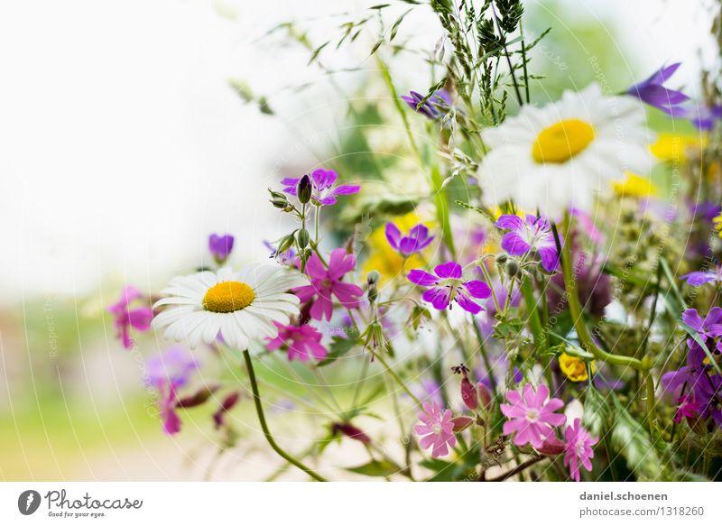 irgendwann kommt er der Sommer Pflanze schön grün weiß Blume Blatt gelb Blüte hell Lebensfreude violett Duft Leichtigkeit