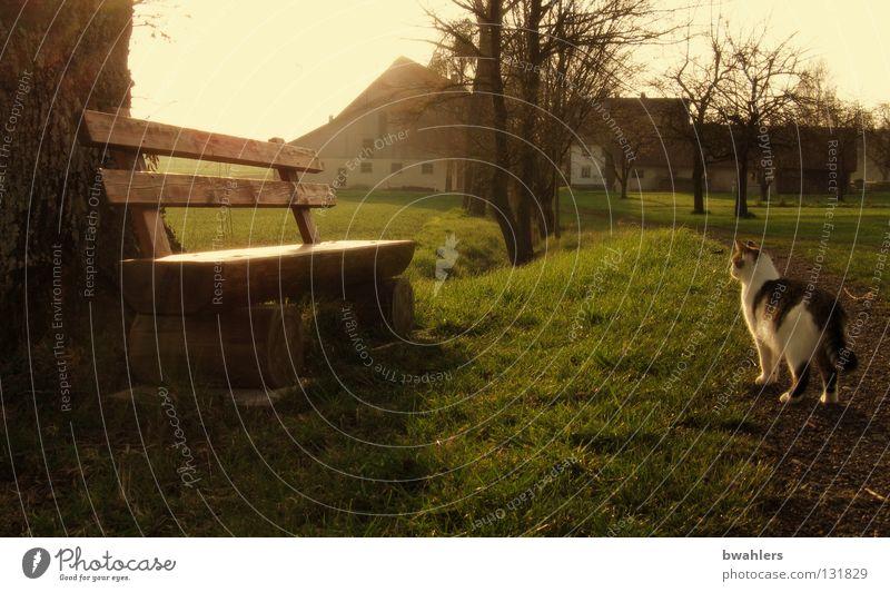 auf dem Land Baum Morgen Nebel Katze Bauernhof Wiese Gras Beleuchtung ruhig Sträucher Haus Gegenlicht Frieden Bank Morgendämmerung Sonne Wege & Pfade friedlich