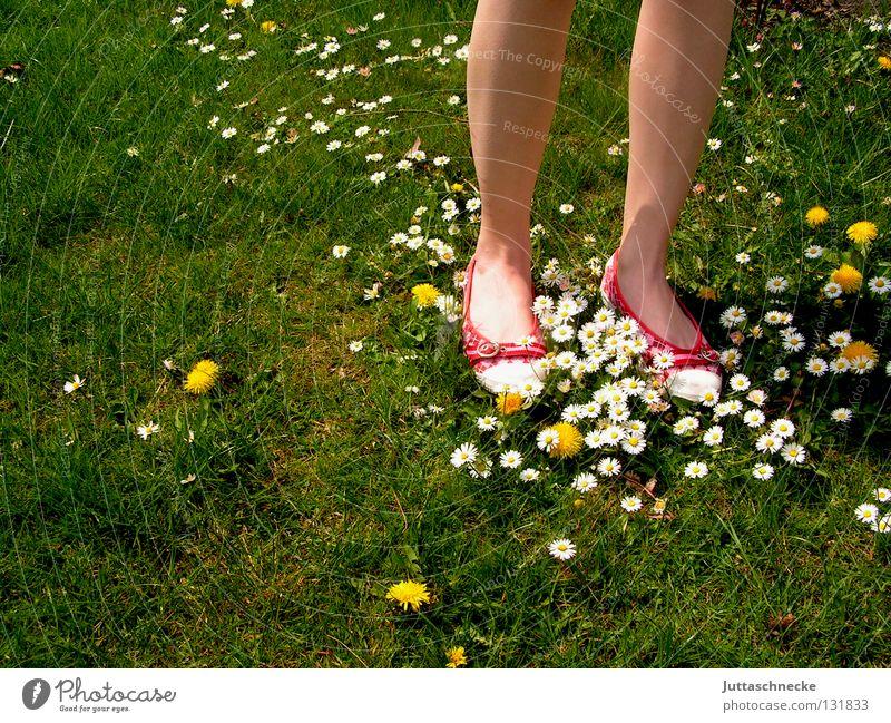 Die roten Schuhe Frau schön Blume grün rot Sommer Freude Wiese Garten Fuß Wärme Schuhe Beine gehen Rasen