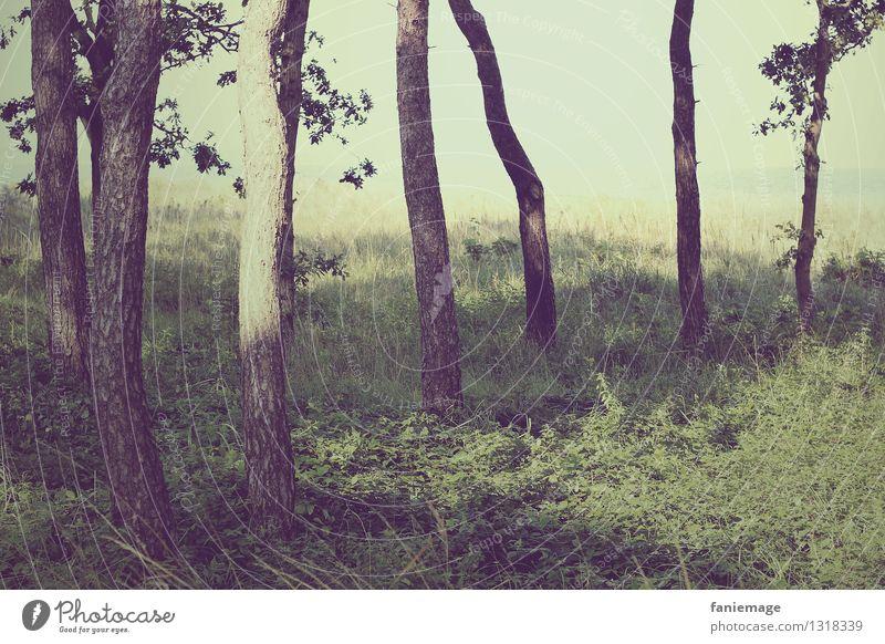 Den Wald vor lauter Bäumen nicht... Natur Landschaft schlechtes Wetter Baum Stimmung dunkel verloren Einsamkeit Wäldchen verirrt Irritation Strukturen & Formen