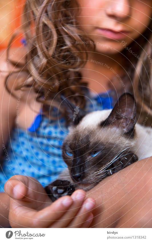 Katzen-Kind exotisch feminin Mädchen 1 Mensch 8-13 Jahre Kindheit brünett Locken Haustier Katzenkopf Katzenauge Katzenpfote Tier berühren genießen ästhetisch