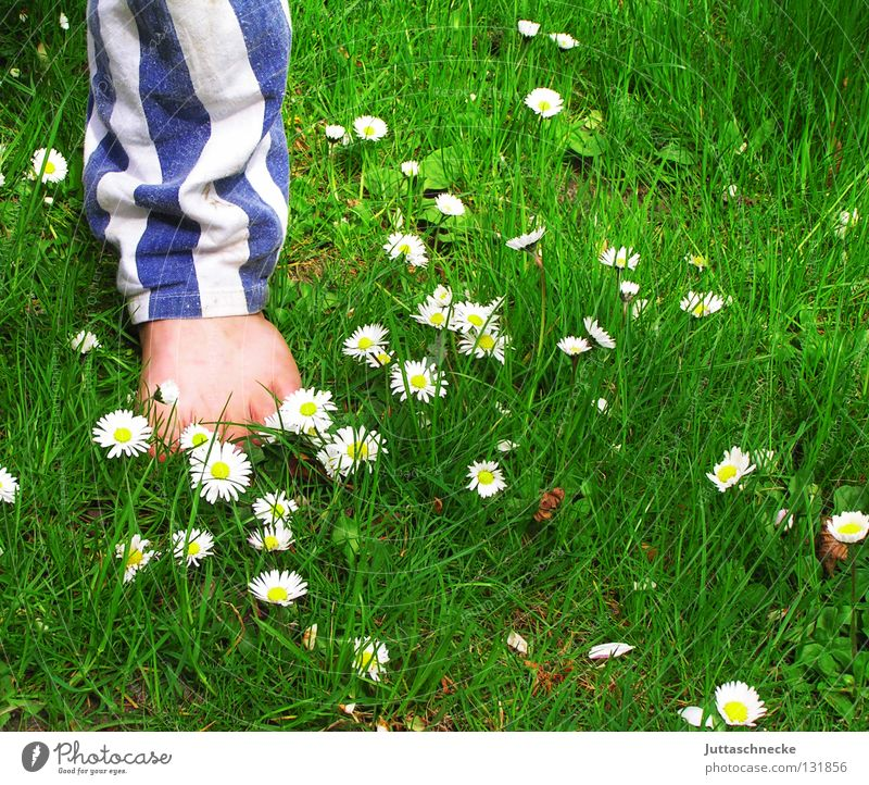 Stars and Stripes Barfuß Zehen Hose Hosenbeine Streifen gestreift Wiese Gras Gänseblümchen Blume stehen Kinderfuß Gesundheit grün weiß Junge Sommer Fuß Beine