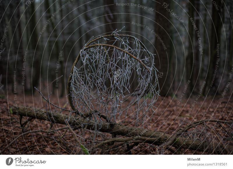 Baum-frost Winter Eis Frost Pflanze Wald alt kalt natürlich Gefühle Einsamkeit Schutz Farbfoto Außenaufnahme Menschenleer Dämmerung Unschärfe