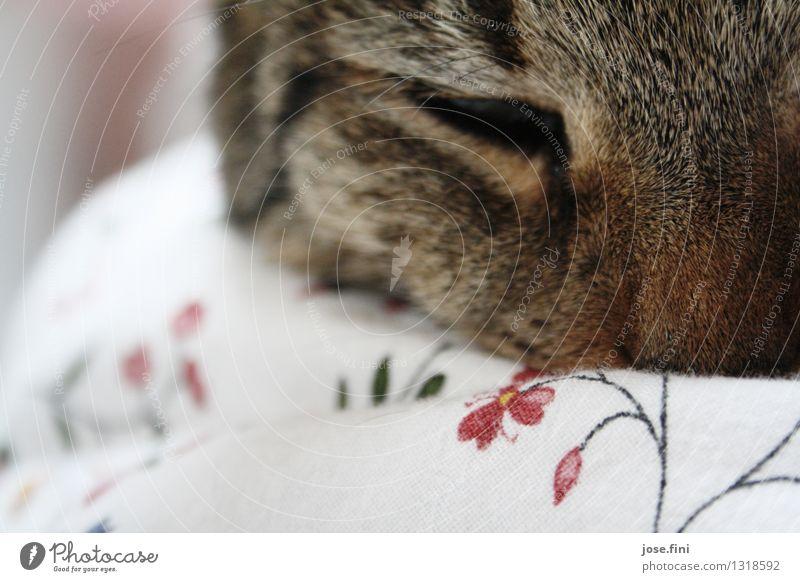 Gutenmorgenkatze harmonisch Sinnesorgane Tier Haustier Katze Tiergesicht Fell Hauskatze Bettdecke Bettwäsche Blumenmuster Erholung schlafen Glück kuschlig