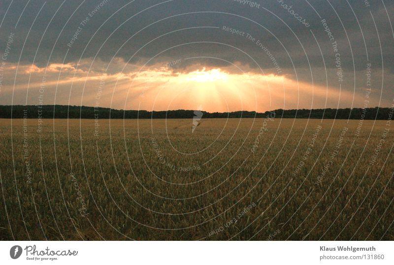 Abendstunde schön Sommer Wolken ruhig Feld Idylle Romantik Frieden Getreide Abenddämmerung Kornfeld Ähren Sommerabend
