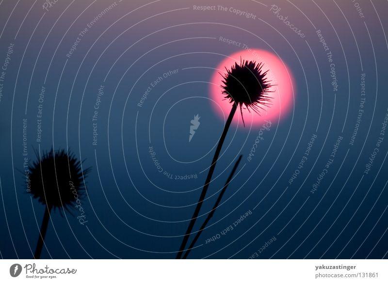 2000 light years from home violett rosa grau blau-grau Dorn Himmelskörper & Weltall Stachel
