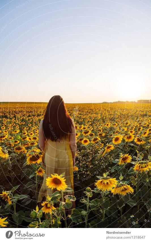 Gegenlicht.... elegant harmonisch ruhig Meditation Duft Sommer Mensch feminin Frau Erwachsene Wolkenloser Himmel Sonne Schönes Wetter Blume Blüte Nutzpflanze