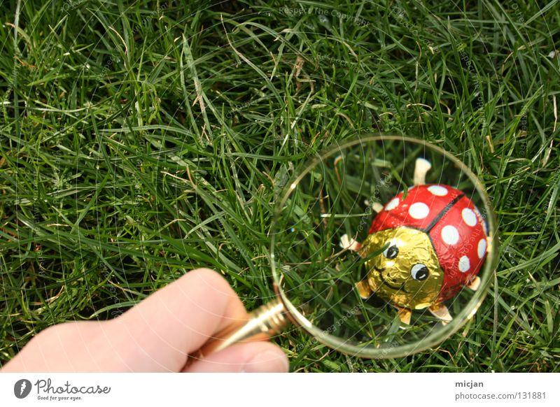 A Good Place For Marienkäfer Hand grün rot Sommer Freude gelb Gras Frühling lachen Glas gold Suche Rasen Ostern Insekt Spuren