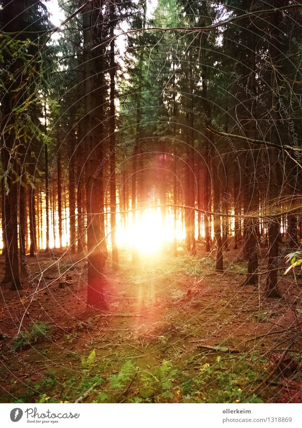 brennender Wald-See Ausflug Sonne Umwelt Natur Pflanze Urelemente Erde Feuer Wasser Sonnenaufgang Sonnenuntergang Sonnenlicht Wetter Schönes Wetter Baum Moos