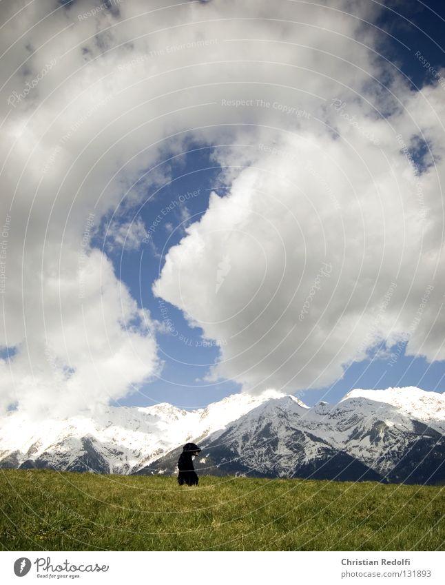 hund sucht... Himmel weiß Sonne grün blau schwarz Wolken Tier Wiese Gras Frühling Hund Landschaft Feld sitzen Aussicht