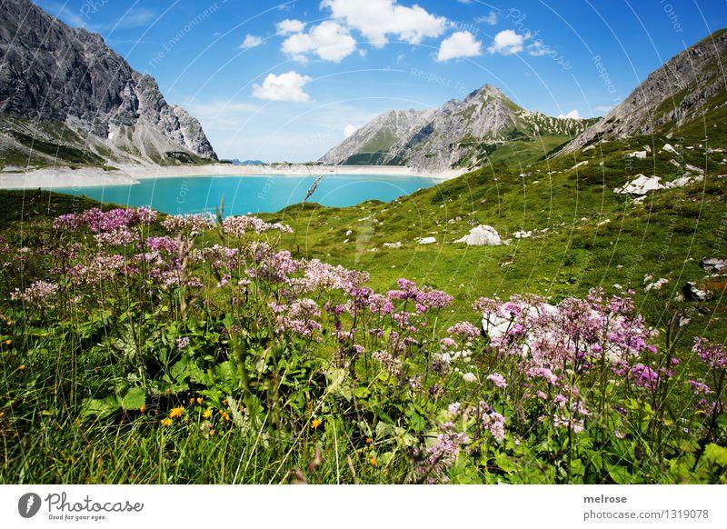 Heimat II Himmel Natur Ferien & Urlaub & Reisen blau grün Sommer Wasser weiß Erholung Blume Landschaft ruhig Wolken Berge u. Gebirge Gras außergewöhnlich