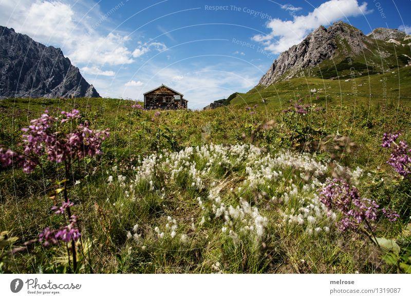 Heimat I Tourismus Berge u. Gebirge wandern Natur Landschaft Himmel Wolken Sommer Schönes Wetter Blume Gras Wildpflanze Bergwiese Blumenwiese Felsen Lünersee