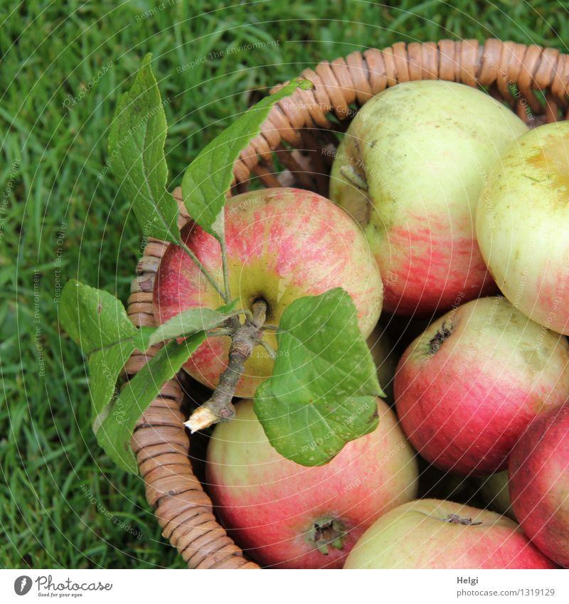 frisch,knackig und lecker... Lebensmittel Frucht Apfel Ernährung Bioprodukte Vegetarische Ernährung Natur Gras Blatt Korb Diät liegen ästhetisch Gesundheit