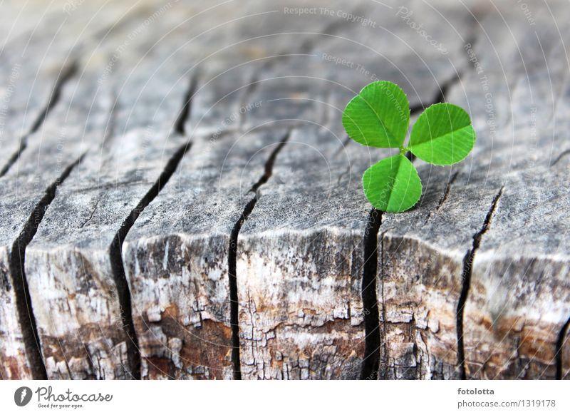 durchsetzungsstark Erfolg Natur Pflanze Blatt Grünpflanze Baumrinde Baumstumpf Holz braun grün Durchsetzungsvermögen Wachstum Naturtöne Farbfoto Außenaufnahme