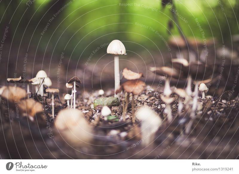 Größenwahn. Umwelt Natur Pflanze Erde Herbst Pilz Wald Wachstum natürlich wild Willensstärke Hochmut Übermut Macht Umweltverschmutzung Umweltschutz Pilzsucher