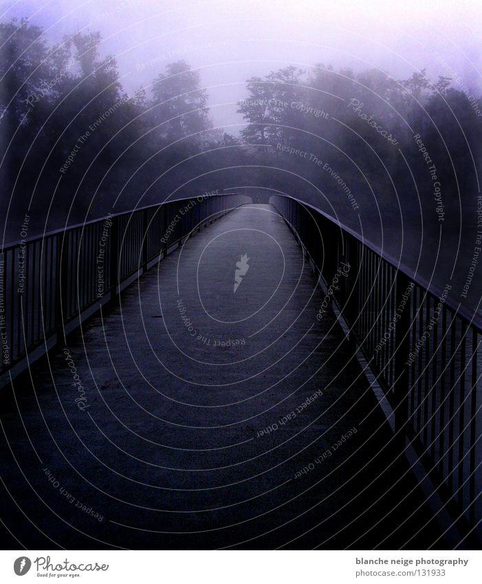 wo beginnt das ende? Baum blau schwarz Einsamkeit Straße Wald dunkel planen Hoffnung Brücke Zukunft Fluss Aussicht Durchblick Lebenslauf Lichtblick