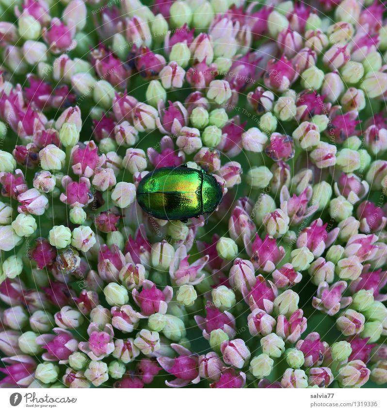 Glanzpunkt Natur Pflanze grün Sommer weiß Erholung ruhig Tier Leben Blüte Frühling Gesundheit glänzend Zufriedenheit Design frisch