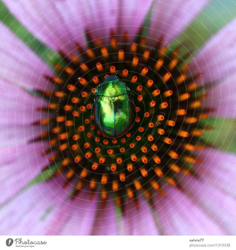 Mittelpunkt Natur Pflanze grün Sommer Erholung ruhig Tier Blüte Gesundheit Garten Gesundheitswesen glänzend orange sitzen ästhetisch Blühend