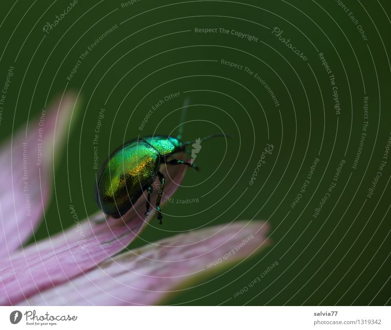 little green Gesundheitswesen Alternativmedizin Fitness Leben harmonisch Wohlgefühl Zufriedenheit Sinnesorgane Duft Natur Pflanze Tier Blume Blüte Garten Käfer