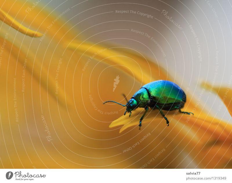 Duft Natur Pflanze grün schön Blume Tier Umwelt gelb Blüte Wege & Pfade Gesundheit Glück klein grau Design glänzend