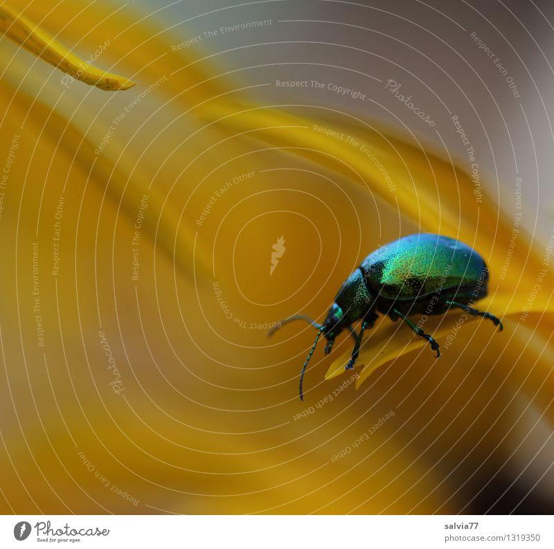 auf Abwegen Natur Pflanze grün schön Farbe Erholung Blume Tier gelb Leben Blüte Frühling klein glänzend ästhetisch genießen
