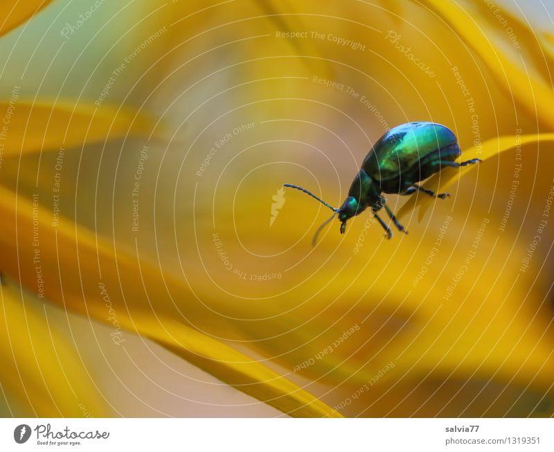 Alles im Griff Natur Pflanze grün Sommer Blume Tier gelb Blüte Gesundheit Garten Gesundheitswesen oben Wildtier authentisch ästhetisch Blühend