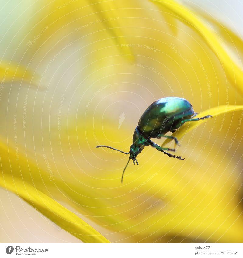 nur Mut Natur Pflanze grün Blume Tier gelb Blüte Gesundheit klein Garten glänzend frisch Wildtier frei Blühend fallen
