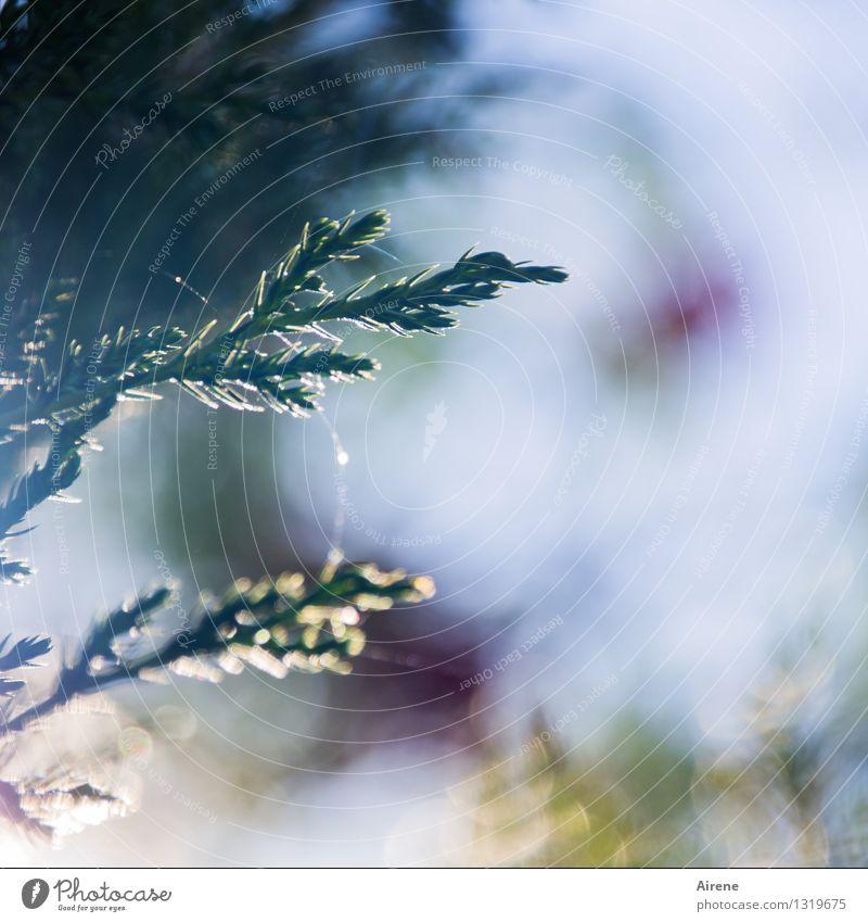 fein gesponnen Himmel Natur Pflanze blau grün Baum ruhig Wald Wärme natürlich Garten glänzend Park Wachstum leuchten Sträucher