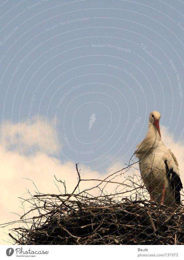 Mein rechter, rechter Platz ist leer... Mensch Natur Einsamkeit Wolken Vogel Wohnung Geburtstag warten Sträucher Ast Zweig Schnabel Blauer Himmel Geburt Nest Storch