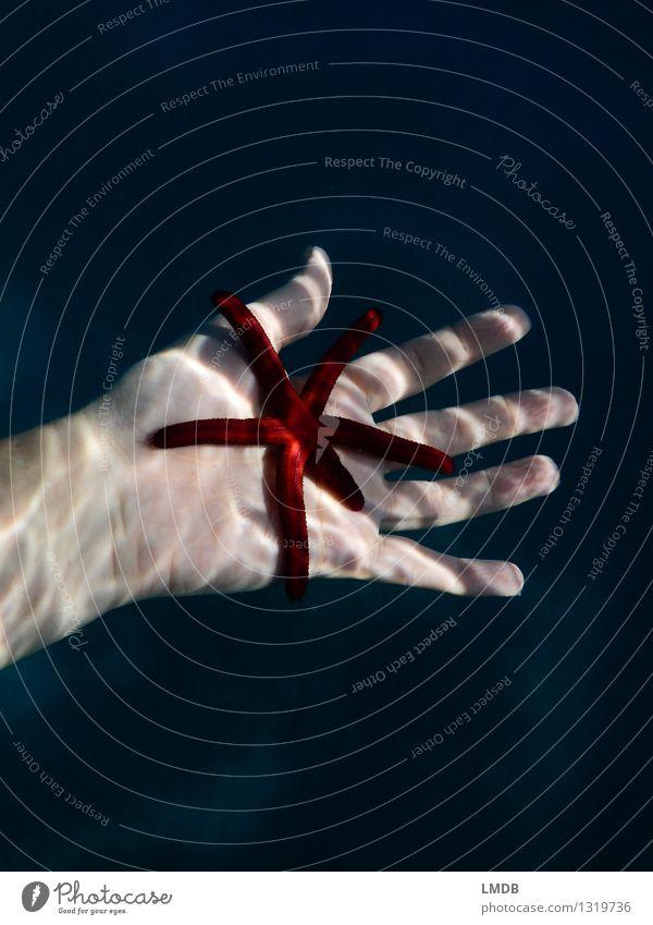 Sternchen fünfeinhalb III Schwimmen & Baden Meer tauchen Hand Finger Wasser Küste Riff rot Tierliebe friedlich Verantwortung achtsam ruhig Interesse einzigartig