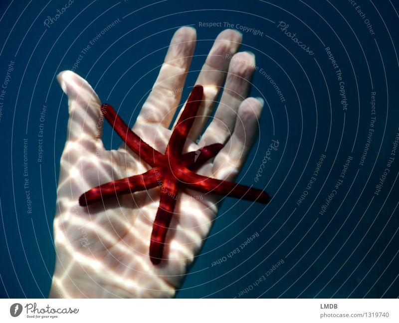 Sternchen fünfeinhalb II Schwimmen & Baden Meer tauchen Hand Finger Wasser Küste Riff rot Tierliebe friedlich Verantwortung achtsam ruhig Interesse einzigartig