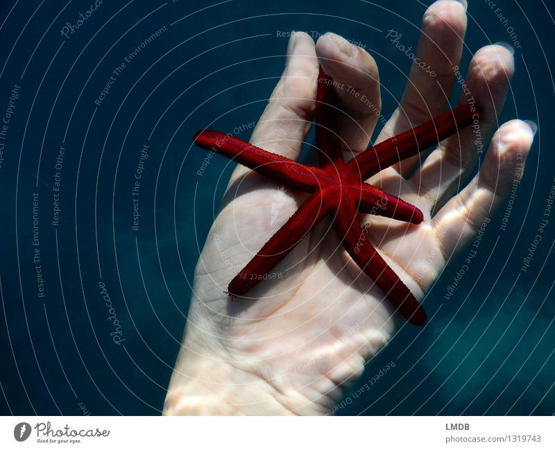 Sternchen fünfeinhalb I Schwimmen & Baden Meer tauchen Hand Finger Wasser Küste Riff rot Tierliebe friedlich Verantwortung achtsam ruhig Interesse Klima Umwelt
