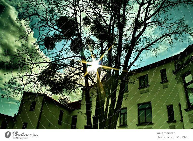 Haus, Baum, Sonne Himmel Wolken Fenster historisch Hinterhof Mistel
