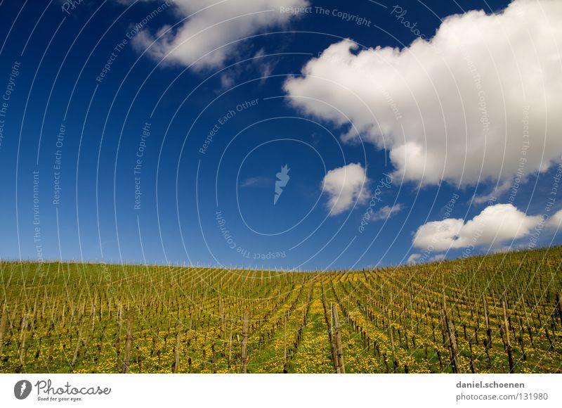 Sonntagsspaziergang schön Himmel Blume grün blau Sommer ruhig Wolken gelb Ferne Erholung Wiese Blüte Gras Frühling Wärme