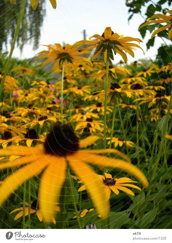 Gelb gelb Blume Himmel