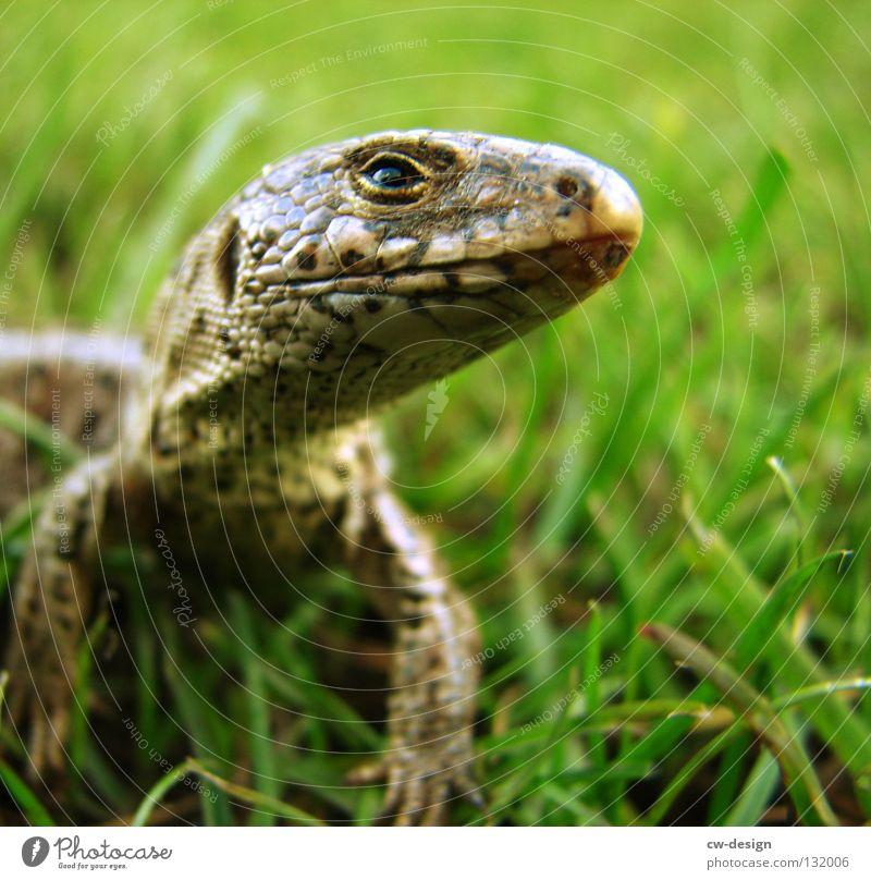 WAHNSINN SCHON IN UNSINN GARTEN II weiß grün Tier Farbe schwarz gelb Auge Gras Glück Garten Stil Denken laufen Haut verrückt Nase