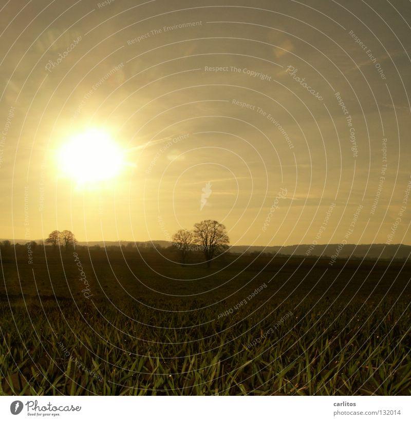 Der Frühling kommt Himmel Freude Ferien & Urlaub & Reisen Wolken gelb Wiese Gras Nebel Wetter Seil Hoffnung Weide Zaun Dunst Schleier
