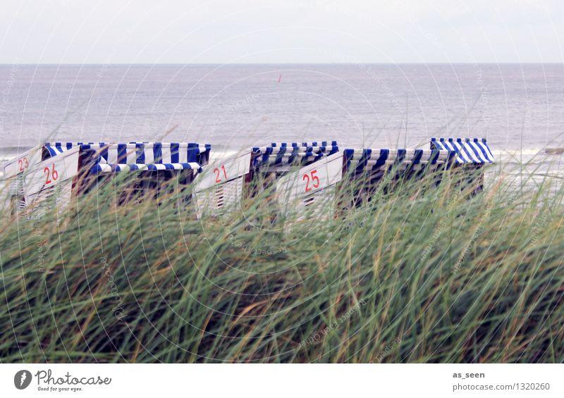 Frische Brise Natur Ferien & Urlaub & Reisen blau Pflanze Sommer Wasser Erholung Meer Landschaft Strand Umwelt Küste Sand Freizeit & Hobby Tourismus Wind