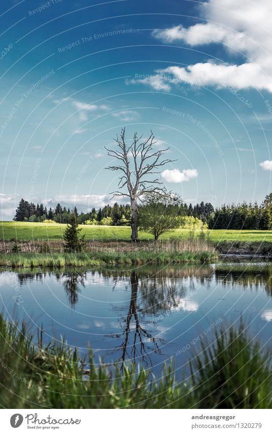 Collateral Beauty Himmel Natur Ferien & Urlaub & Reisen blau grün schön Sommer Wasser Baum Landschaft Wolken Wald Umwelt Frühling Gras Denken