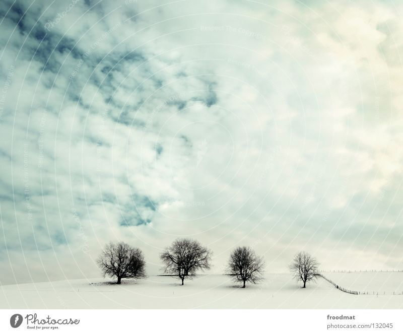 four of a kind Natur schön Himmel weiß Baum Pflanze Winter ruhig Wolken Einsamkeit kalt Schnee Erholung Landschaft hell Zusammensein
