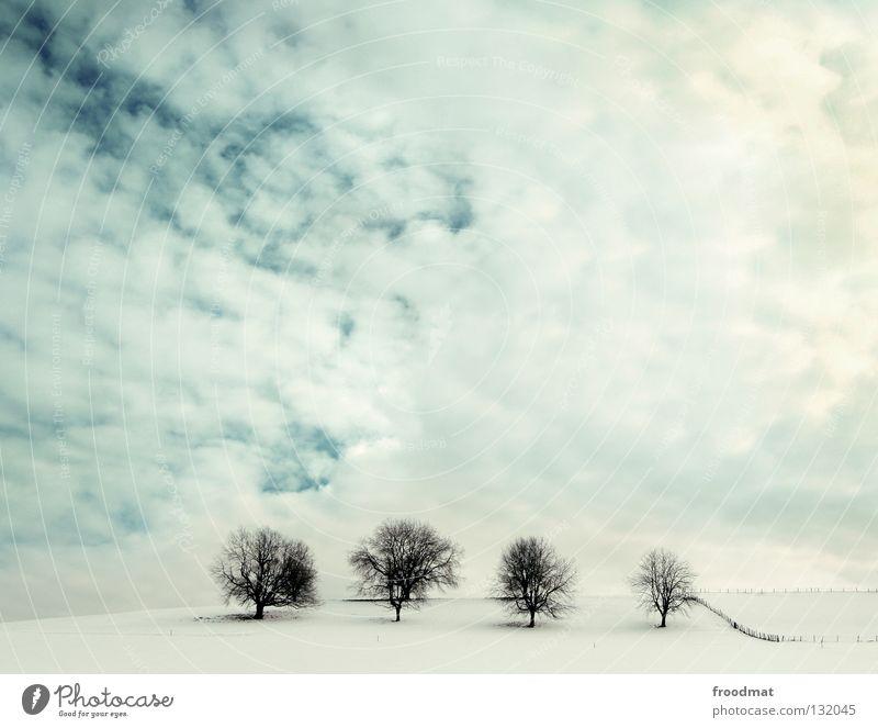 four of a kind Schweiz Hügel Baum laublos kalt Wolken sehr wenige 4 Zaun Schwung Hintergrundbild Winter Sauberkeit aufräumen ruhig Erholung weiß Einsamkeit