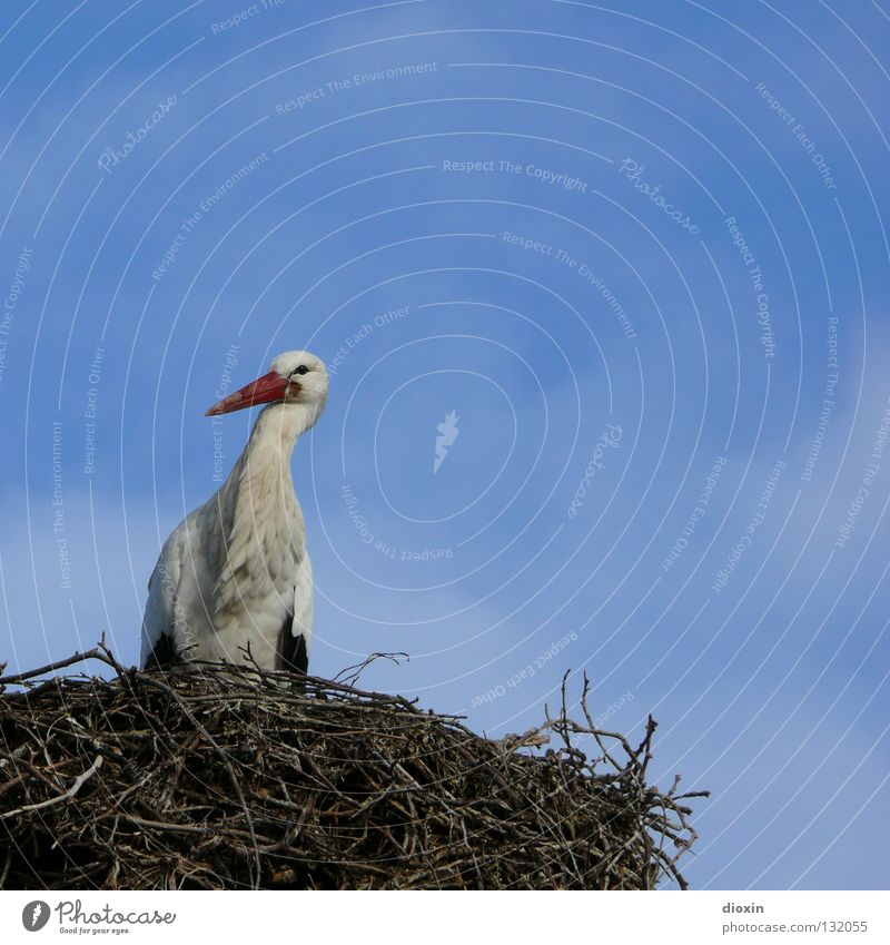 Babylieferservicezentrallager #2 Storch Weißstorch Schreitvögel Zugvogel Schnabel Wolken Vogel Nachkommen Nest Sträucher Nestwärme Geburt Geborgenheit blau