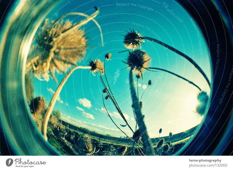 GLOBES Sonne Sonnenstrahlen Sommer Gras Halm Pflanze stachelig Watte weich Wind Brise Morgen Fischauge rund Momentaufnahme Weitwinkel Waschmaschine analog Natur