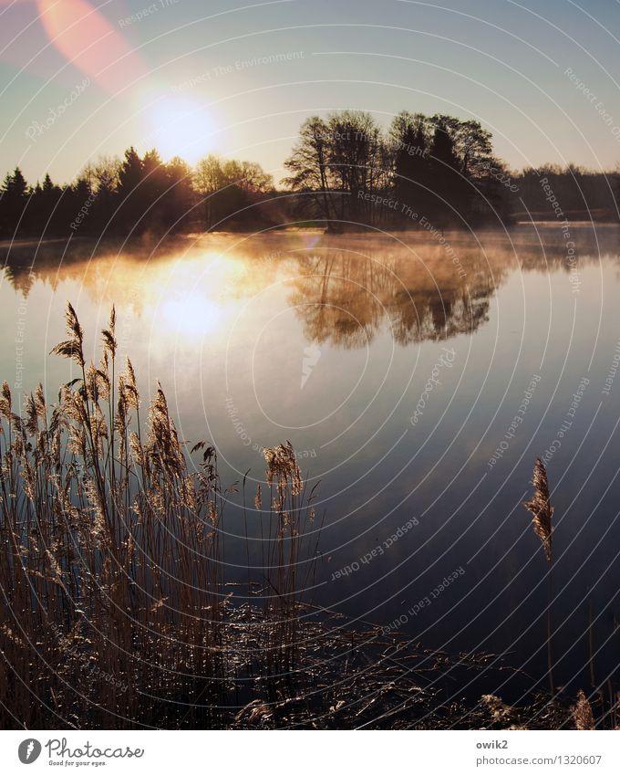 Ruhetag Umwelt Natur Landschaft Pflanze Wasser Wolkenloser Himmel Horizont Klima Wetter Schönes Wetter Nebel Baum Sträucher Seeufer Teich glänzend leuchten hell