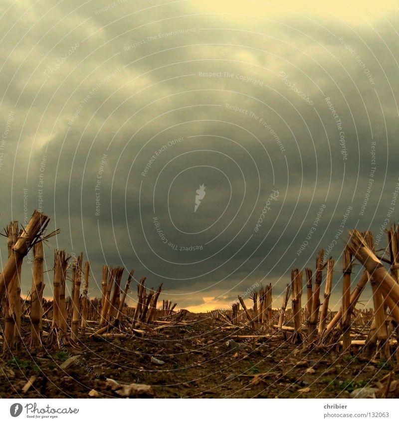 Unrasiert Gedeckte Farben Lebensmittel Landschaft Pflanze Erde Wolken Gewitterwolken Horizont Herbst Unwetter Regen Hagel Nutzpflanze Feld verblüht dehydrieren