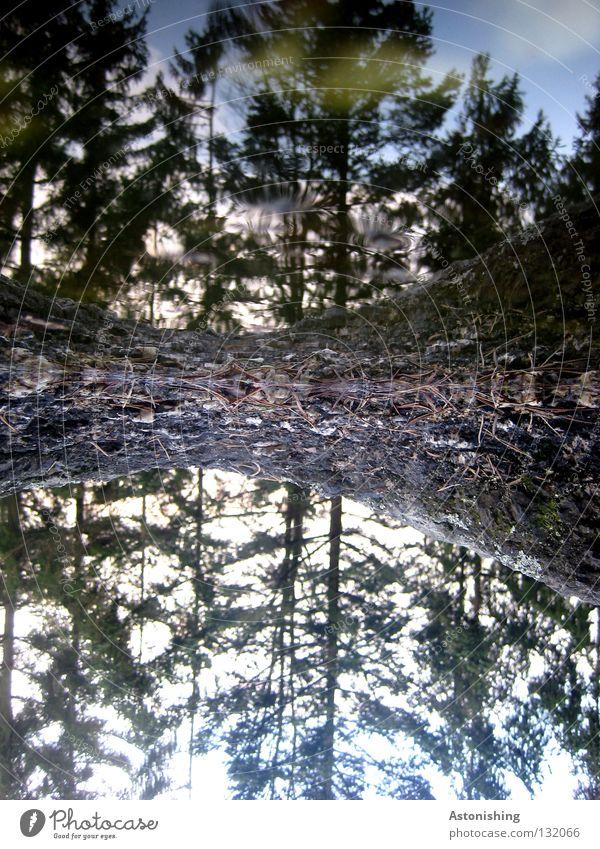 hoch hinunter Wasser Himmel Baum Wolken Wald Stein Erde Perspektive Wachstum Bodenbelag Tanne Baumstamm Pfütze Doppelbelichtung Nadelbaum