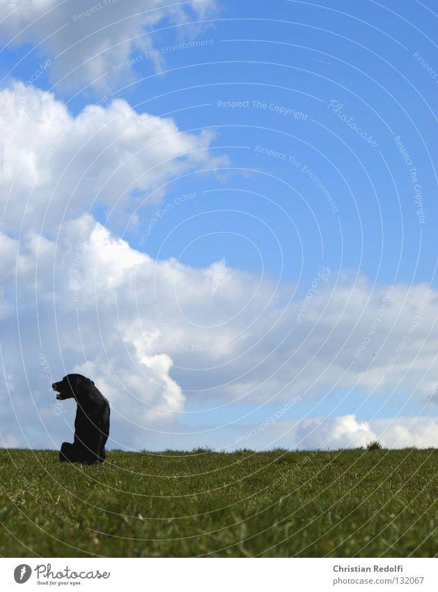 hund sucht .... Mann Himmel weiß Sonne grün blau schwarz Wolken Tier Wiese Gras Frühling Hund Landschaft Feld sitzen