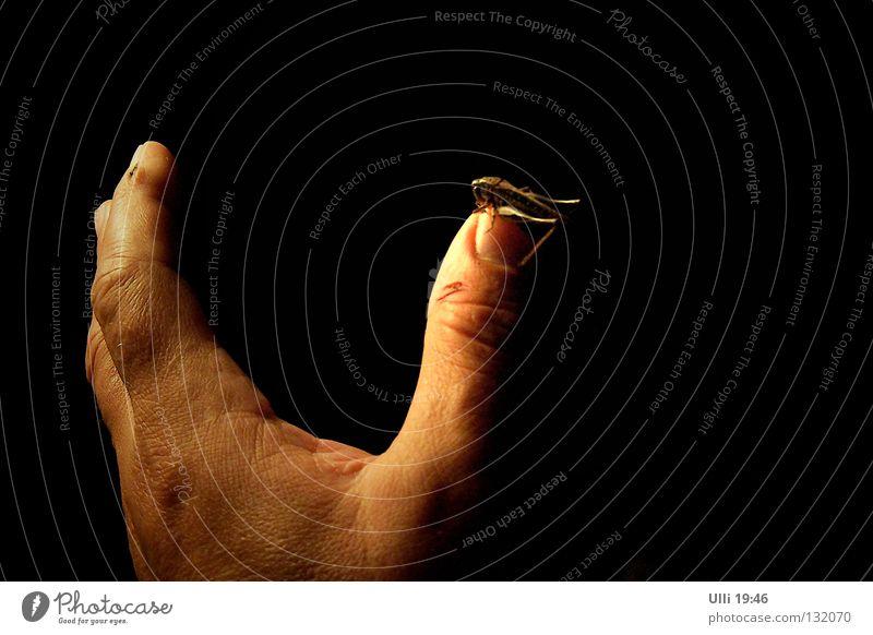 Da bin ich wieder! Mensch Hand Sommer Tier dunkel Erholung elegant Finger ästhetisch Schutz Insekt Nachthimmel Vertrauen Neugier Geborgenheit Daumen