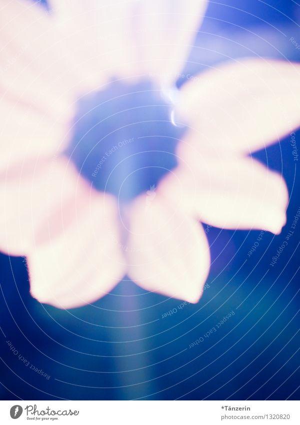 Sonnenblümchen unscharf Umwelt Natur Pflanze Sommer Blume Blüte Grünpflanze Sonnenblume Garten frei Fröhlichkeit frisch hell natürlich schön Wärme blau gelb